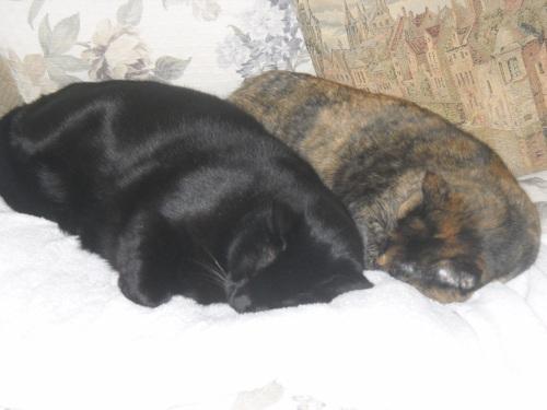 Boo & Maggie
