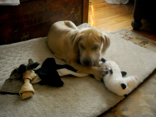 Andi and his toys. (spoiled to no end...)
